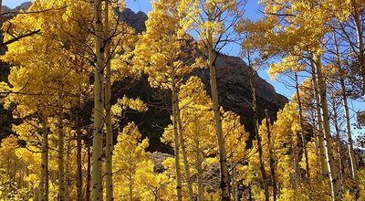 1024px-2013-10-06_15_04_21_Aspens_during_autumn_along_the_Changing_Canyon_Nature_Trail_in_Lamoille_Canyon,_Nevada