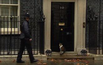 【動画】英首相官邸の猫ラリー君と警官のやり取りが面白い!