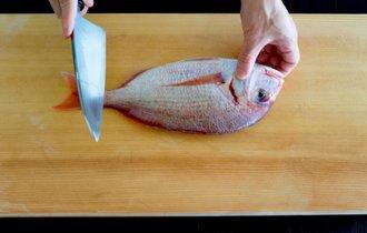 池田教授「将来、魚の活き造りは食べられなくなるかもしれない」