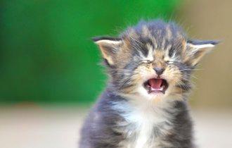 ペットの「涙やけ」よさようなら。「ホウ酸クリーナー」の作り方