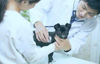 犬、猫それぞれ違う風邪。獣医師が教える気になる症状と予防法