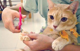 ペットの爪から血が出たら?応急処置法と止血剤がない時の代用策