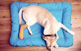 飼い主に怪我を隠す犬や猫。骨折の見分け方と家庭での応急処置法