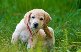 アレルギーに苦しむペットに気づいて!5つの症状チェックと予防法