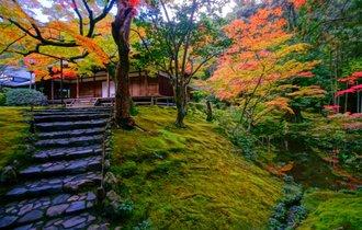 緑の絨毯の中で、深呼吸。京都「苔寺」で仏教の宇宙観に耽る旅へ