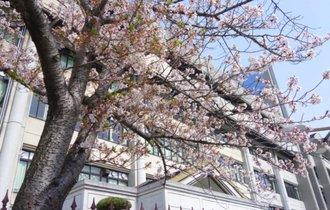 日本を「時代遅れ」にしている、入学式や入社式という悪習慣