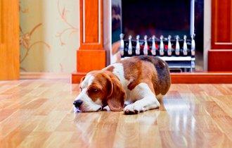 獣医師が教える、犬猫には危険なフローリングによるケガの予防法