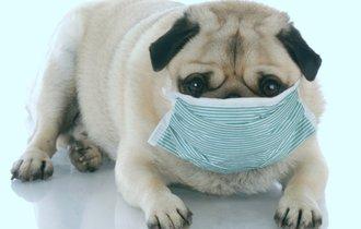 獣医師が教えるペットの「肌荒れ」。その原因と早期発見する方法