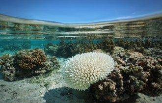 サンゴ礁の北上と死滅が、なぜ「沖縄の海の青さ」を奪うのか?