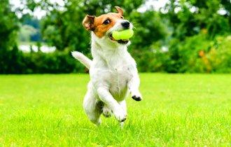 獣医師が伝授。家庭でできる「愛犬の老化を防いで遅らせる方法」