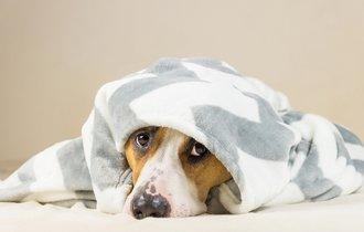 便秘の犬にジャガイモが効く。与える前に必ずやるべき2つのこと