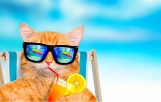 多頭数飼いは特に注意。愛猫が水を飲みたがらない理由と改善方法