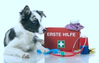 獣医師が教える。緊急時に安心「ペット救急箱」の中身10点セット