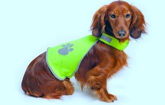夜の散歩でも肉球やけどの可能性。怪我や事故から愛犬を守る方法