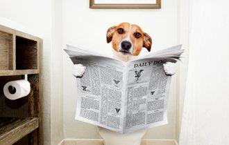 ペットの「便秘」には危険が潜んでいることも。家でできる予防法