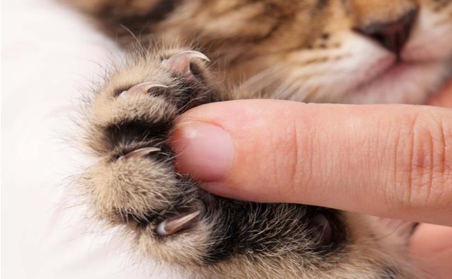 第3問:猫の爪の説明で間違っているのはどれか?