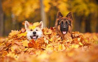 獣医師が教える。秋からのペットの健康管理で注意すべき3つのこと