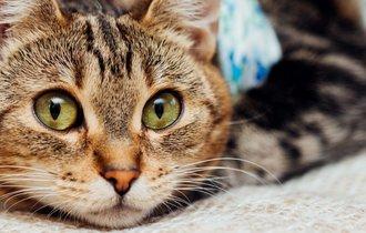 愛犬愛猫の「皮膚のケガ」。獣医師が教える見分け方と応急処置法