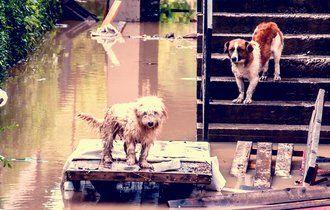 愛するペットが避難所で暮らすために必要な、8つのしつけと備品