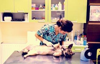 愛犬、愛猫が除草剤を誤食。病院に行くまでに飼い主がすべきこと