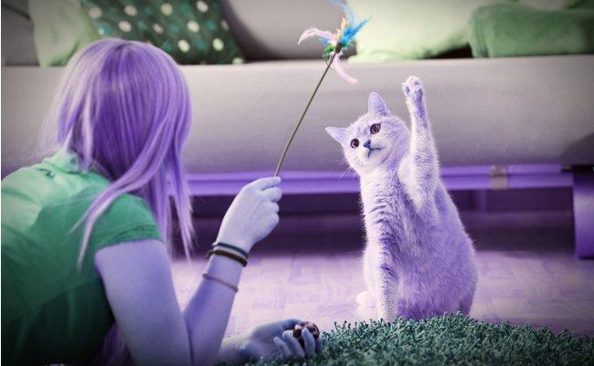 空前の「猫ブーム」で起きている、人間のリンパ節炎とは?