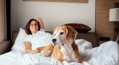 Woman,And,Her,Beagle,Dog,Meet,Morning,In,Bed