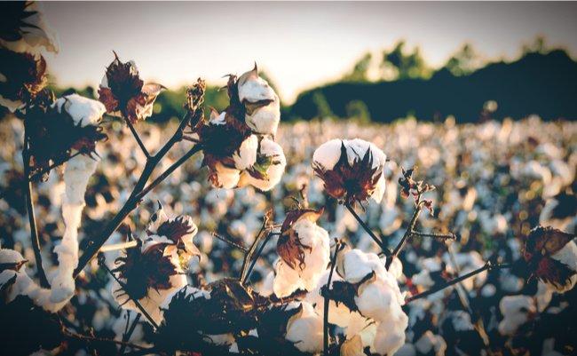 ユニクロと日本経済を欧米が狙い撃ち。ウイグル「新疆綿」停止が分断する世界市場